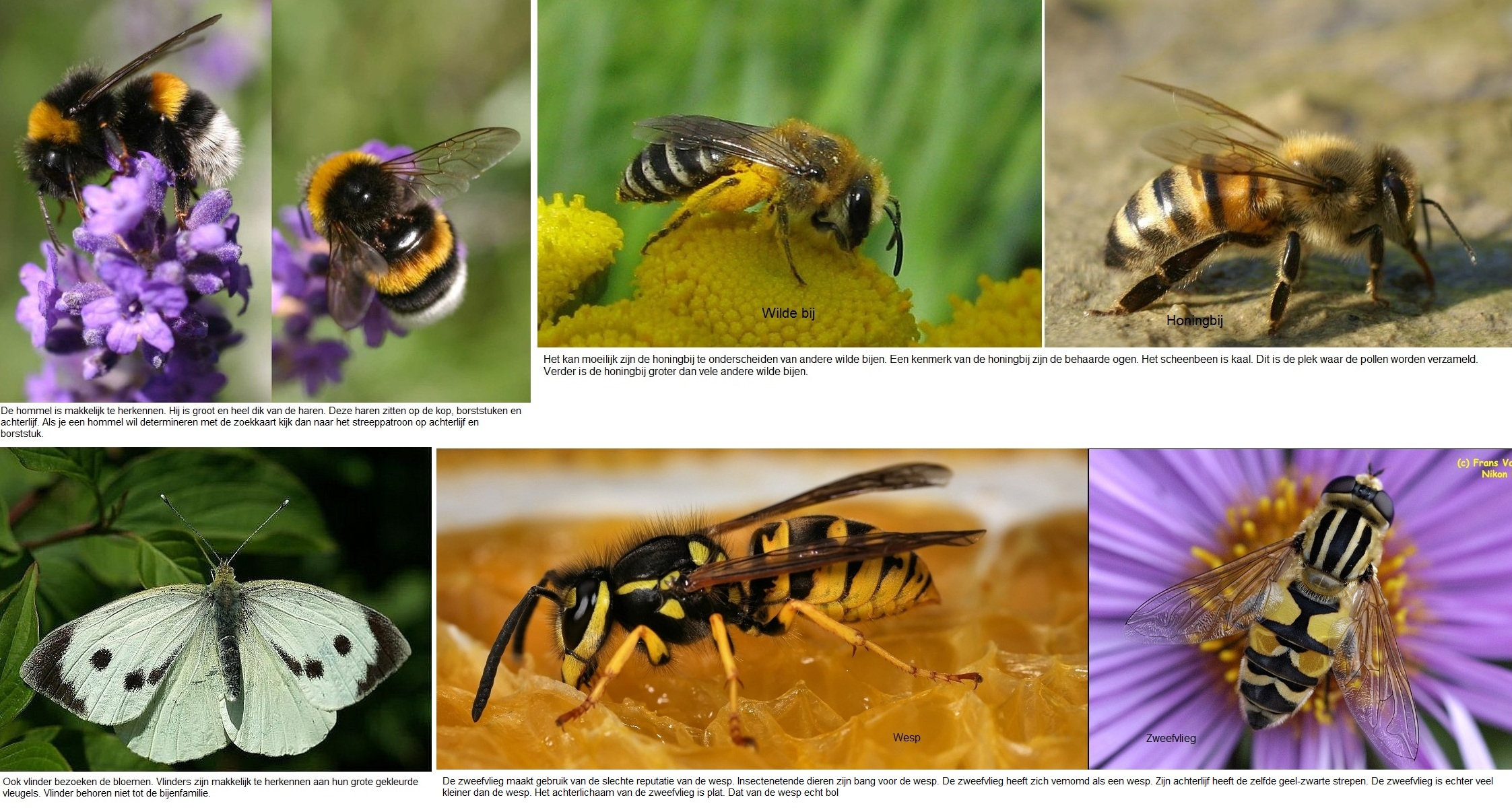 totalecompilatieinsecten2