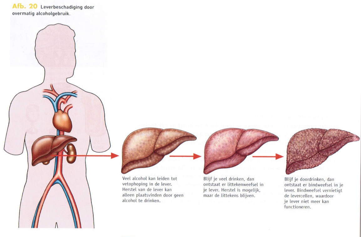 leverbeschadiging herstellen